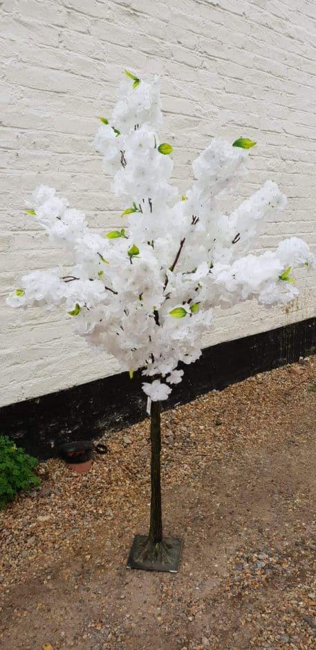 White Blossom Tree Hire Hertfordshire