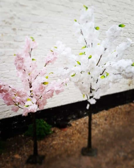 White Pink Blossom Tree Hire Hertfordshire